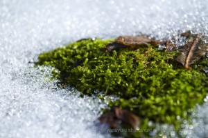 SNOW WILL COME SOON-the longest autumn season